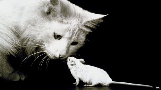 _84029360_cat_and_mouse-spl